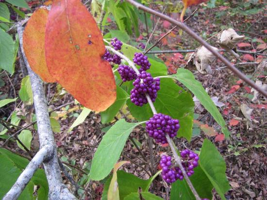 Ozark Mountains: Celebrating autumn at King's Bluff