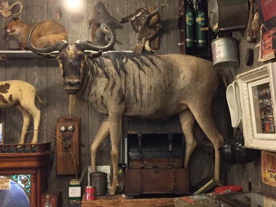 ลองบีช, วอชิงตัน: moose? yak?  I don't know, but this guy looked huge in person