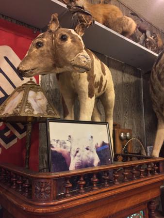 ลองบีช, วอชิงตัน: Two-headed cow....oddly fascinating since it appears life-like (but is not)