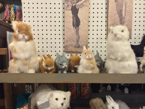 ลองบีช, วอชิงตัน: I love bunnies, but these were so realistic looking in person....kind of cool and weird