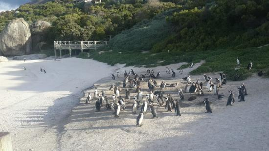 Wow Cape Town Tours: Penguin Colony in Simonstown