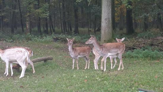 Wildpark Grafenberg