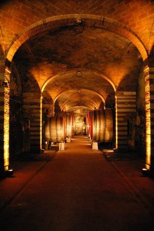 Villa  Vistarenni: Cellar