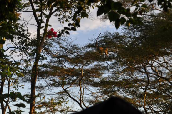 The Nile Porch: View of monkeys from the porch