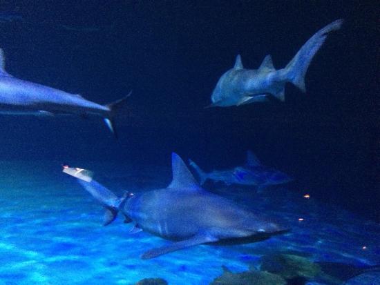 Aquarium Bild Von Mandalay Bay Aquarium Las Vegas