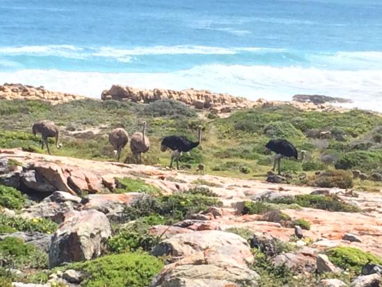 Cape Convoy Tour South Africa