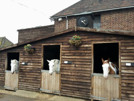 Trent Park Equestrian Centre