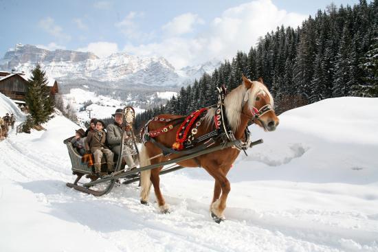 Camping Park Baita Dolomiti: Gite a cavallo