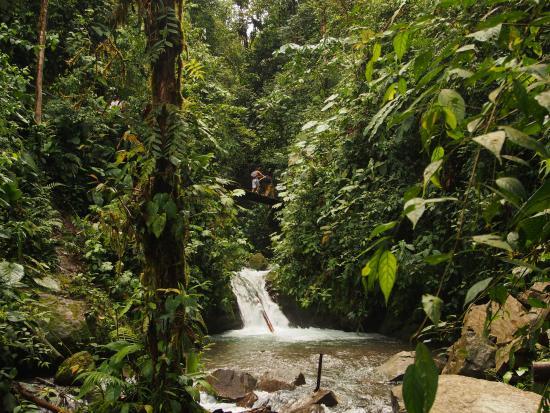 Nambilla Cascadas: L'eau se faufile au milieu d'une végétation luxuriante