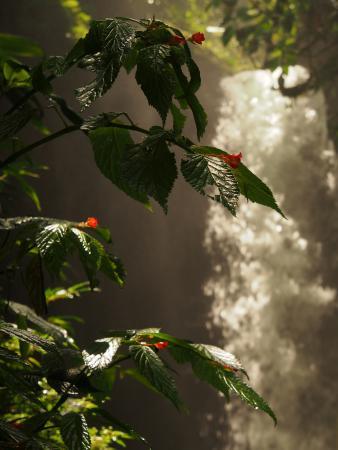 Nambilla Cascadas: L'une des nombreuses cascades de Mindo