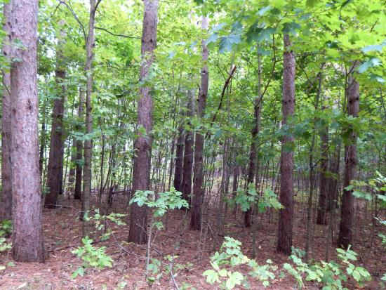 Pierce Stocking Scenic Drive: Lots of views of a dense hardwood forest