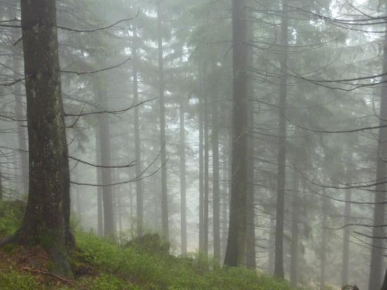 Seebach, เยอรมนี: Schwarzwald bei Nebel