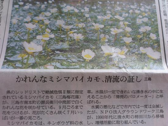 三島 梅花藻の里