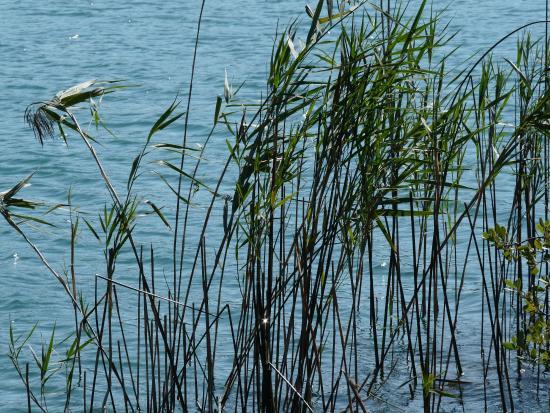 Le Frasnois, Frankrig: bord du lac