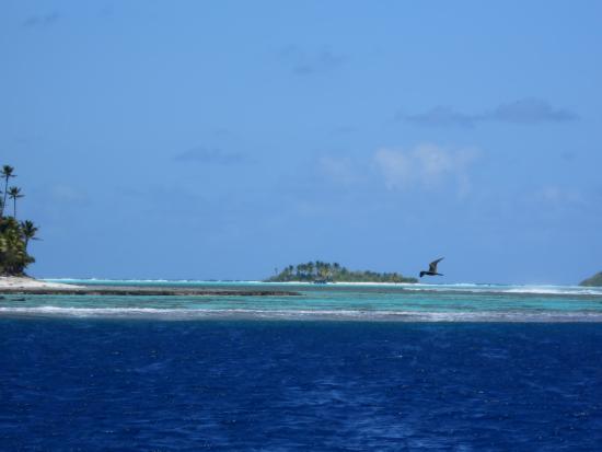 Islas de la Sociedad, Polinesia Francesa: Motu et lagon