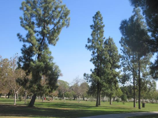 Green Grass And Tree Area Picnic Tables Sante Fe Recreation Area Irwindale Ca Picture Of Santa Fe Dam Recreation Area Irwindale Tripadvisor