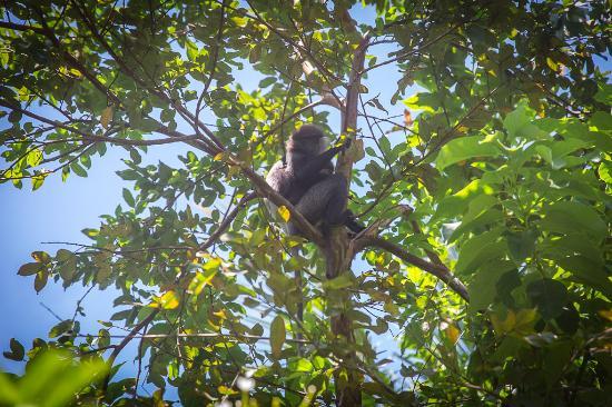 White House: Monkeys in the trees