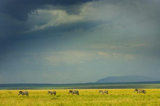 Kenia: Kenya's national Parks and Reserves are found in virtually every part of the country,each offers