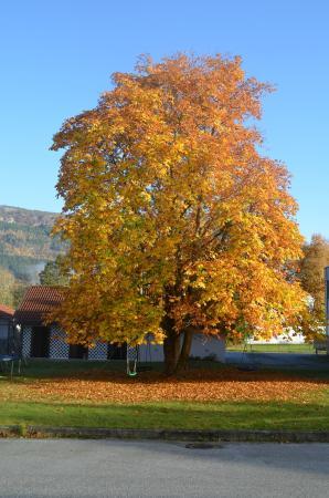 Innvik Fjordhotel: Autumn