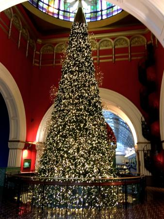 The famous Christmas Tree - Picture of Queen Victoria Building ...