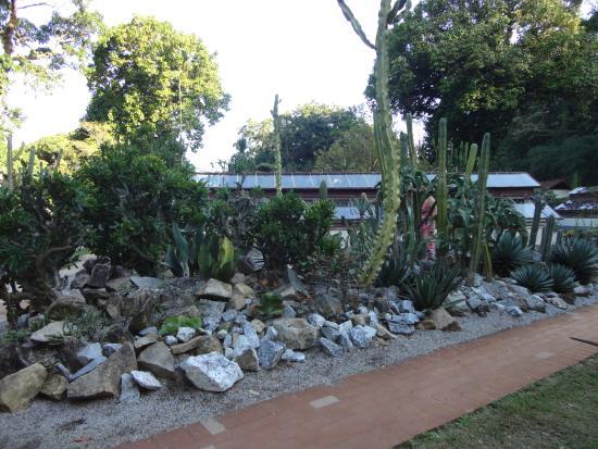 Plantas carnívoras  Foto de Jardim Botânico, Rio de Janeiro