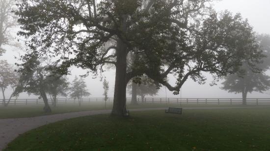 Riverside Inn Bed & Breakfast: A beautiful foggy morning, in the front yard of the Riverside estate.