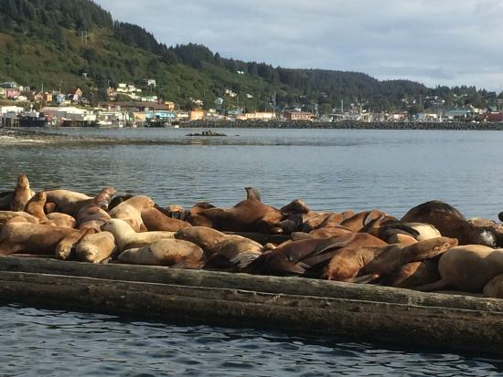 A Channel View B&B: Seals in the harbour