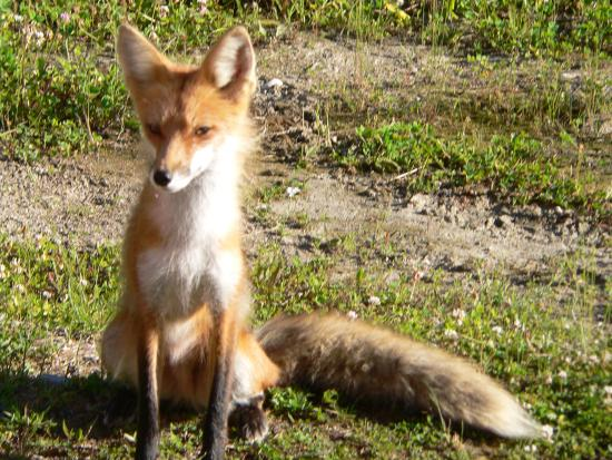 Sunset Resort and Campground: Wildlife on the Ash River