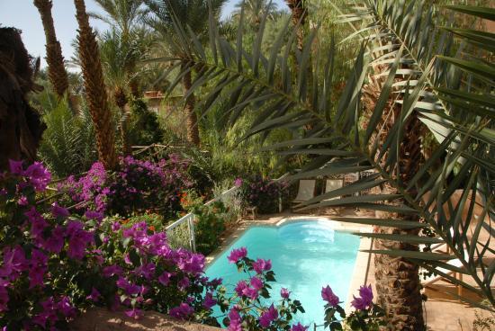 Villa Zagora Ma Villa au Sahara : Piscine vue de la terrasse