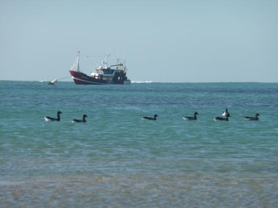 Les Tranquilles d'Oleron: De la plage à côté des Tranquilles
