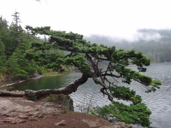 Moran State Park: Tree