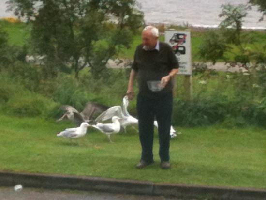 Old Surgery Guesthouse: Feeding the Gulls