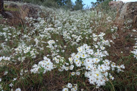 Bellvue, Colorado: Wild flowers