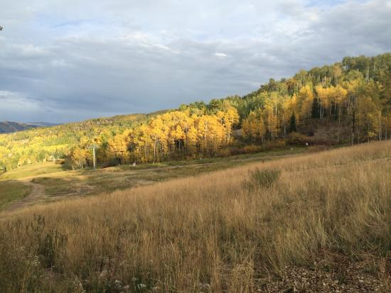 The Timberline Condominiums: Aspens changing color just steps away from our unit.