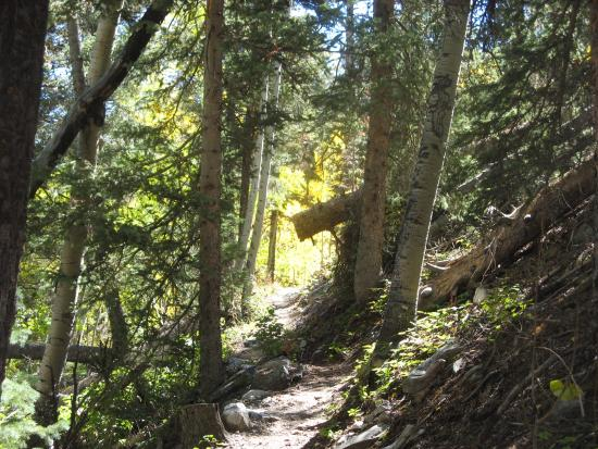 Parque Nacional Great Basin, NV: Trail