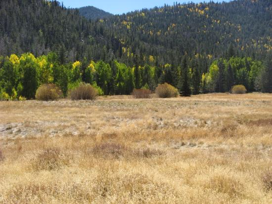 Parque Nacional Great Basin, NV: Meadow