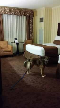 Eldorado Resort Casino: Pet Friendly!