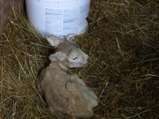 Turtleback Farm Inn: Two days old
