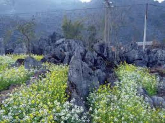Vietnam: cao nguyên đá đồng văn