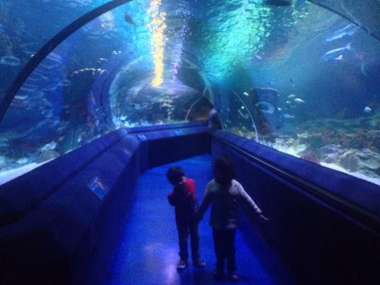 photo0.jpg - Picture of Istanbul Aquarium, Istanbul - TripAdvisor