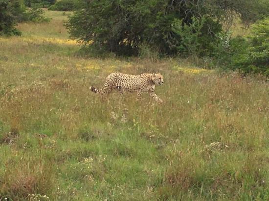 Bush Lodge - Amakhala Game Reserve : Erste Begegnung im Busch