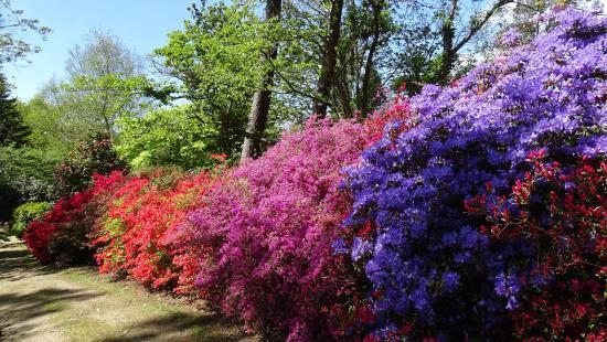 Des all es bien trac es photo de parc botanique de cornouaille combrit tripadvisor - Jardin botanique de cornouaille ...