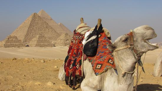 Around Egypt Tours - Day Tours: Fatma got us a great deal on our camel ride. She was fabulous for making sure we got the best de