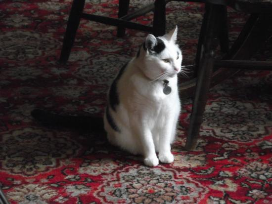 The Dickleburgh Crown: The Pub Cat
