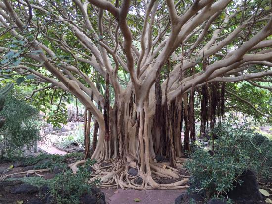 Overzicht picture of jardin canario las palmas de gran for Jardin 76