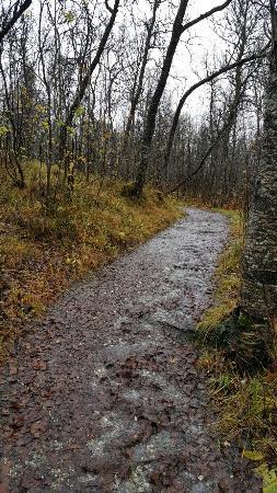 Tromso Botaniske Hage: 20151017_103210_large.jpg