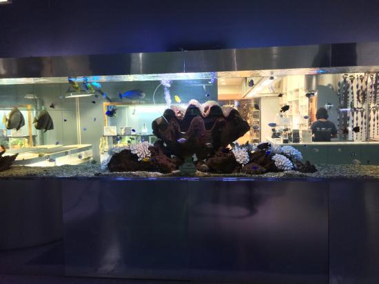 Fish picture of tokyo tower aquarium minato tripadvisor for Tower fish tank