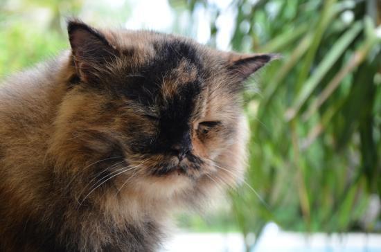 Paradise Bay Beach & Watersport Resort: 猫