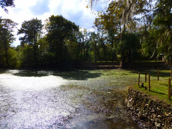 Radium Springs gardens: Pool of disappointment