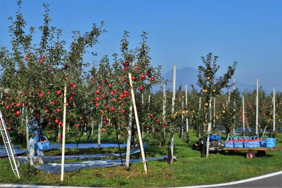 Apple Road